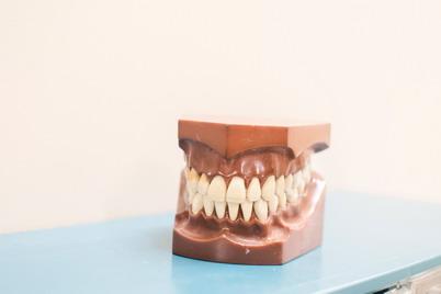 Pas odontologą